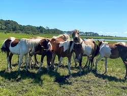 Let our Owners and Inkeeper book a boat tour for you to see Chincoteague's famous Wild Ponies up close and personal! Call us at Miss Molly's to book your stay and request our concierge services!