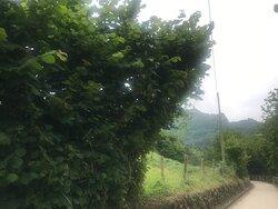 Nogales, manzanos y avellanos se suceden a lo largo del camino