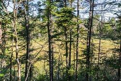 Meadow Hidden along the Trail