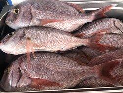 fachada principal en la actualidad y algunos de nuestros platos a base de pescados frescos