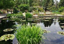 Denver Botanic Garden - Lily Pond