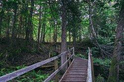Sentier de la Forêt Marine