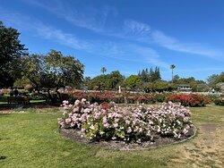 View of Rose garden