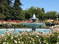 Fountain surrounded by rose bushes and benches