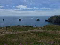 Wildlife & Forts of Berry Head Trail