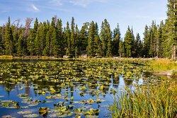 Nymph Lake from Bear Lake Trailhead