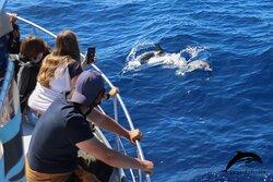 Atlantic spotted dolphins. OceanExplorer La palma