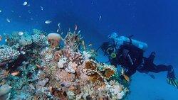 Diving Hurghada