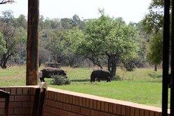 Blouwildebees Uitsig view of hippos