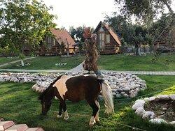 Bungalov evler bahçe evcilhayvanlar