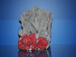 blue and red coral