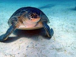Meet Jimmy the Turtle 🐢
