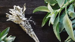 Product image of some of our sage bundles that can be purchased at Mother's Natchez.