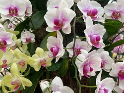 Stunning, exotic orchids in the Hong Kong Botanical Gardens Greenhouse.