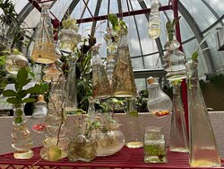 Cuttings of exotic plants and flowers inside the Hong Kong Botanical Gardens Greenhouse.