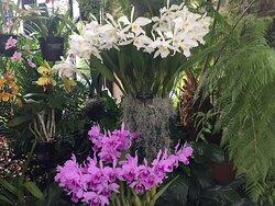 The beauty of Longwood Gardens