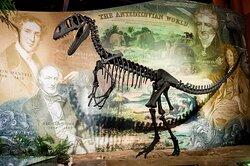 Megalosaurus cast