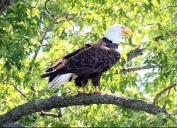 Eagle on tour!