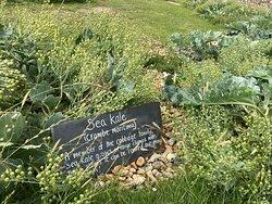 1.  Birling Gap Cafe;  the garden