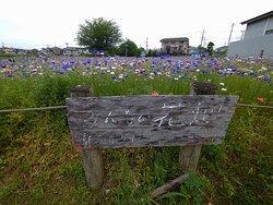 みんなの花畑:看板があります。花畑はロープで囲ってありはいれません