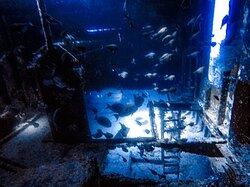 Inside the ship  wreck, Glenn Nusa!!!!