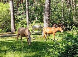 Horses in freedom 🐎🐎🐎🐴
