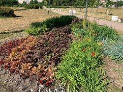 Клумбы и сено-трава в парке