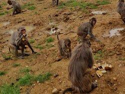 Activité soigneur d'un jour  Collation des singes