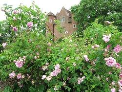 an abundance of roses throughout...