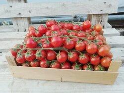 i nostri pomodorini