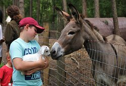 Donkey meeting baby