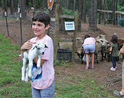 distracted by baby goats