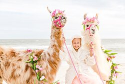 Izzy with llamas on beach