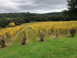 The beautiful Abelli vineyard at its autumn best in Red Hill,