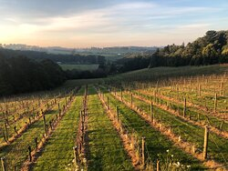 Winter is a beautiful time to visit the Mornington Peninsula with the Eldridge vineyard in Red Hill - one of our most scenic.