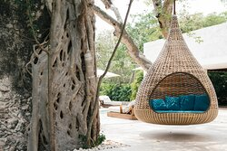Nest And Tree