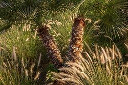 Resort Desert Palm