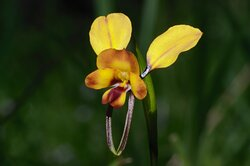 Spring brings colourful wildflowers and stunning orchids. Learn about their fascinating secret lives