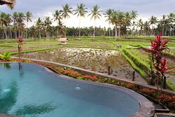 Relaxing pool & Beautiful rice paddy view at Two Bedroo Pool Vila