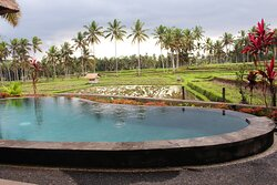 Swimming Pool & Rice Paddy View at Two Bedroom Pool Vila
