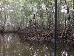 Mangroves during a boat trip on brackish waters