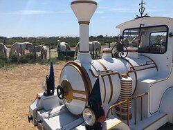 Le Petit Train Camarguais