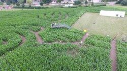 Staunton Maize Maze Viewing Platform