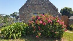 L'île fleurs