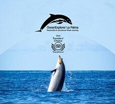 OceanExplorer La Palma - Whale Watching Flipper & Bussard