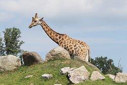 Se volete trascorrere una giornata speciale, che abbiate figli o no, vi consiglio vivamente di visitare lo Zoo Safari di Pombia: poter vedere da vicino animali esotici come giraffe, rinoceronti, dromedari, leoni, tigri, struzzi ecc ecc è un'esperienza straordinaria!