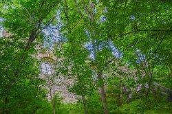 Las na wzgórzu zamkowym
