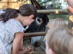 Kids Petting Farm Aninals