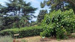 cartelli delle piante