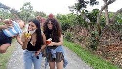 """Experiencia Viasam  tour privados . """"Día completo: excursión a los manglares de Churute y granja de cacao (salida desde Guayaquil)"""""""
